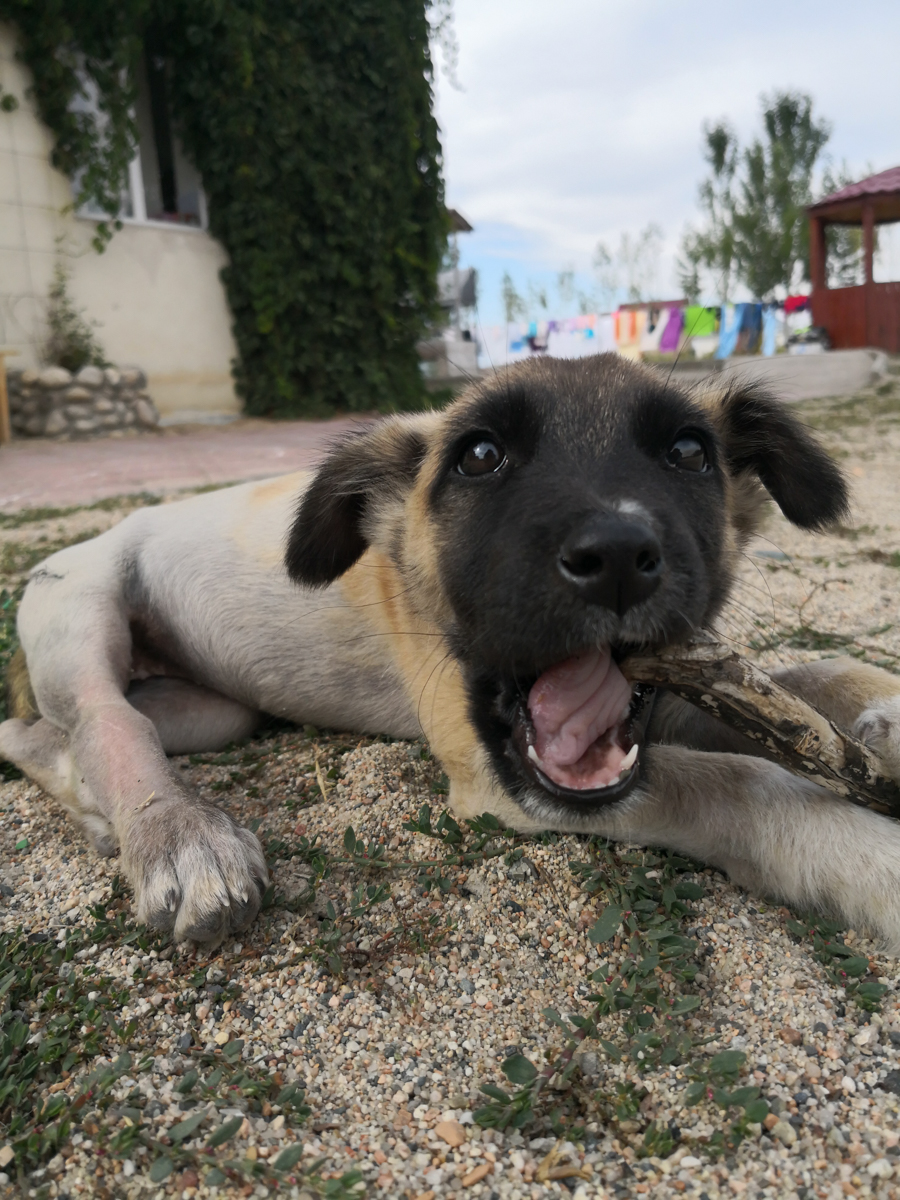 Znaleźliśmy Szczęście w Kirgistanie- czyli historia Lucky i jej wielki finał